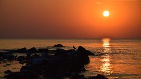 Silhouette of a seagull on a rock, at sunrise at the Mediterranean Sea or ocean, with orange sun and stones coming out of the royalty free stock image
