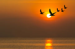 Silhouette of seagulls flying at sunset Stock Image