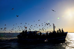 Silhouette of seagulls and passenger ferry Stock Photo