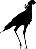 Silhouette of a secretary bird, walking Stock Images