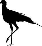 Silhouette of a secretary bird, walking Royalty Free Stock Photo