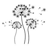 Silhouette set collection dandelion and fly petals. Vector illustration Stock Photos