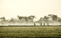 Silhouette of several people walking in the middle of vast rice field. They are farmers who started to work. This picture was taken at sunrise Royalty Free Stock Image