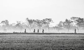 Silhouette of several people walking in the middle of vast rice field. They are farmers who started to work. This picture was taken at sunrise. This is black Royalty Free Stock Photos