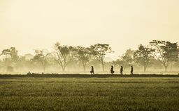 Silhouette of several people walking in the middle of vast rice field. They are farmers who started to work. This picture was taken at sunrise Royalty Free Stock Photography