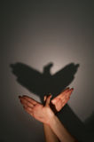 Silhouette shadow of eagle. Bird from young womans hands Stock Images