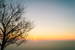 Silhouette shed leaves tree against the sun rise in the cleared Royalty Free Stock Image