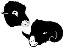 Silhouette of sheep Stock Photos