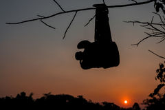 Silhouette shot of Army water canteen Royalty Free Stock Image