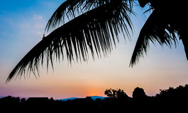 silhouette shot image of coconut tree and sunset sky in backgrou Stock Images