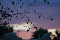 Silhouette shot of leaves on a tree branch with an indigo sky background