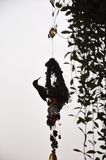 Silhouette of side profile of a sunbird on it`s nest royalty free stock images