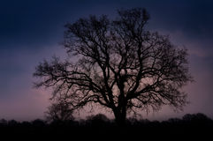 Silhouette simple d'arbre au coucher du soleil Image libre de droits