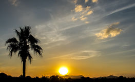 Silhouette of Single Big Coconut Palm Tree at The Corner while Sunset (Sunrise) with Copyspace Royalty Free Stock Images