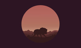 Silhouette of Single lion in fields Royalty Free Stock Images