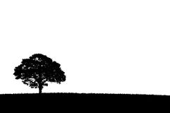 Silhouette of a single tree. On a white background royalty free stock photo