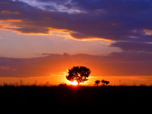Silhouette of a single tree against the setting sun Royalty Free Stock Image