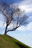 Silhouette of a single tree without leaves on a top of hill,gree Stock Photography