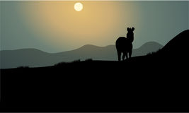 Silhouette of single zebra Royalty Free Stock Photos
