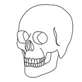 Silhouette skeleton of the human skull icon Stock Images