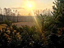 Silhouette of small pine tree. Park, forest and the sun with cloud Stock Image