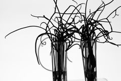 Silhouette of small plants in test tubes Stock Photo