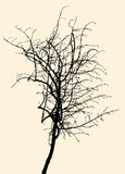 Silhouette of a small tree Stock Photography