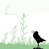 Silhouette of the snipe Royalty Free Stock Photos