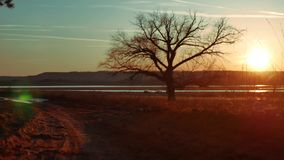 Silhouette Solitary tree in golden sunset . silhouette of a lonely tree on nature road sunset beautiful landscape. Silhouette Solitary tree in golden sunset stock video footage
