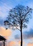 Silhouette Solitary tree at the sunset Royalty Free Stock Images