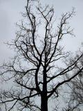 Silhouette sombre d'un fond nu noir de ciel nuageux d'arbre images stock