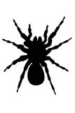 Silhouette of spider. Black silhouette of spider illustration on a white stock illustration