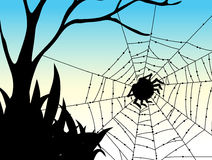 Silhouette spider on web Stock Images