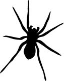 Silhouette of spider. On white background Royalty Free Stock Images