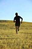 Silhouette sport man running off road in countryside on yellow grass field at sunset Royalty Free Stock Photography