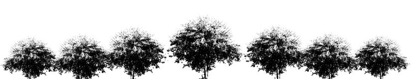 Silhouette of spreading tree. In row Royalty Free Stock Photo