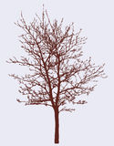 Silhouette of a spring tree Stock Images