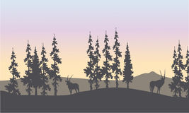 Silhouette of spruce and antelope Royalty Free Stock Photos