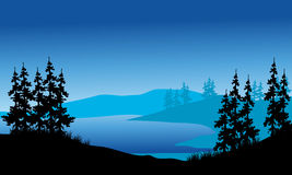 Silhouette of spruce on the backgrounds blue Stock Images
