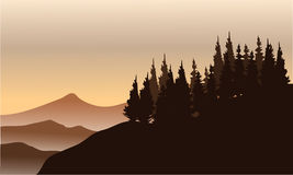 Silhouette of spruce on the hills Royalty Free Stock Image