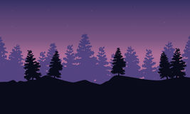 Silhouette of spruce scenery at night. Vector art Stock Image