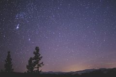 Silhouette of Spruce Trees Under Starry Night Stock Photos