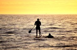 Silhouette of Stand up paddler at sunset, paddle board sport. Royalty Free Stock Photography