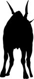 Silhouette of a standing eland antelope Royalty Free Stock Photography
