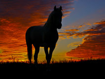 silhouette of a standing horse on a background of orange clouds in the evening Stock Photos