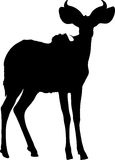 Silhouette of a standing kudu antelope Royalty Free Stock Photography