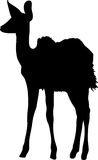 Silhouette of a standing kudu antelope Stock Photography