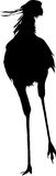 Silhouette of a standing secretary bird Stock Images