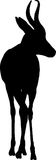 Silhouette of a standing springbok antelope Stock Photo