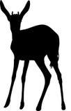Silhouette of a standing springbok antelope Stock Image